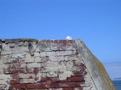 Seagull on Alcatraz - stock photo