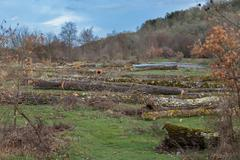 bunch of felled trees - stock photo