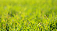 Green Blured Grass With Focus Motion - stock footage