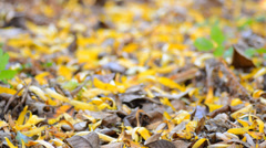 Yellow Blured Leafs With Focus Motion through the Scene Stock Footage