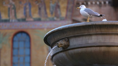 Fountain with seagull walking on the edge - typical square in rome Stock Footage