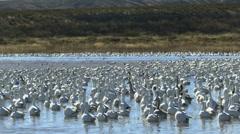Birds Splashy Water Takeoff Stock Footage