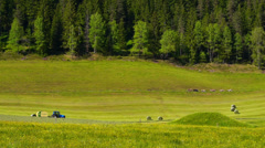 Alpine farming. Tractor working and cows grazing. Stock Footage