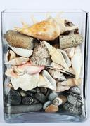 aquarium with shells, stones and gravel - stock photo