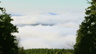 Stock Video Footage of Fog between trees and over forest