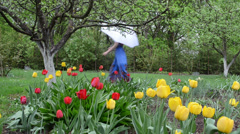 Woman welly shoes umbrella walk spring garden colorful tulips Stock Footage