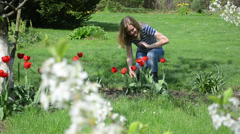 Woman in blue clothes cut red flowers in spring garden Stock Footage