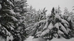Snow falling with trees on the background. Heavy snowfall during winter Stock Footage