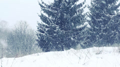 Snow covered fir trees. Snowstorm Stock Footage