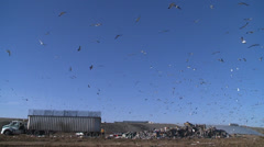 SEAGULLS ENVIRONMENTAL LANDFILL GARBAGE DUMP AND RECYCLING  HD  1080 1920X1080 - stock footage