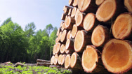 Stock Video Footage of Softwood Forestry