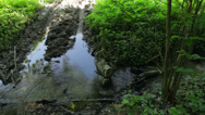 Stock Video Footage of Forest road in the swamp meadow