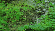 Stock Video Footage of swamp Forest