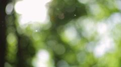 Glare sun on leaves of trees - stock footage