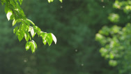 Stock Video Footage of Green leaves under the light of sun