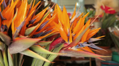 Strelitzia, bird of paradise flower, funchal market, madeira, portugal Stock Footage