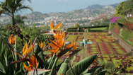 Stock Video Footage of strelitzia, funchal botanical garden, madeira, portugal