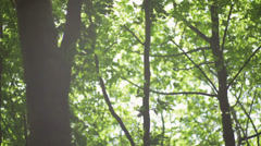 Glare of the sun on green leaves Stock Footage
