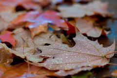 Fallen down leaves - stock photo
