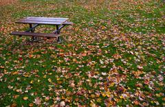 Fallen down leaves Stock Photos