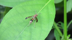 Insect on the leaf Stock Footage