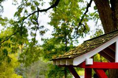 gingko leaves - stock photo