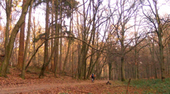 Cyclist in the autumn park. Stock Footage
