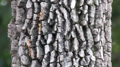 Fire ants on the tree Stock Footage