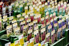 flowers assortement crop seed garden market - stock photo