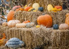pumpkins and gourds - stock photo
