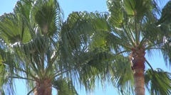 Beautiful palm tree coconut leaf exotic island hot blue sky day tropical holiday Stock Footage