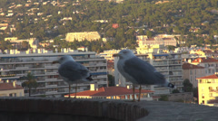 Couple seagull watching panoramic coastline hill cityscape outdoor sunny day hot Stock Footage