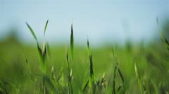 Spring grass in sun light and defocused sky on background Stock Footage