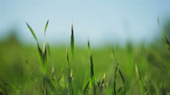 Stock Video Footage of spring grass in sun light and defocused sky on background