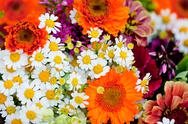 Stock Photo of beautiful colorful collection of flowers spring summer celebration