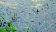 Stock Video Footage of Biebrza swamps national reserve