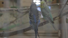 Parrots in a cage Stock Footage