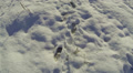 Snow surface with traces.  Slow Aerial Footage