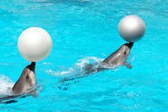 Delfiinit pallot Kuvituskuvat