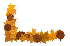 autumn leaves border - stock photo
