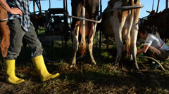 Farmers ryots couple prepare cow animals for milk in rural farm Stock Footage