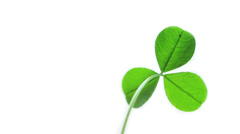 Green clover. Isolated on white. Stock Footage