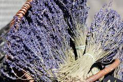fresh aromatic lavender in basket macro outdoor - stock photo