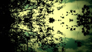 Stock Video Footage of mirror illusions-leaf tree