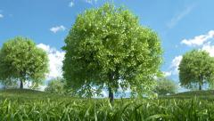 Multiple Trees Growing - stock footage