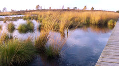Small pond in a nature reserve. Stock Footage