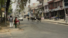 Cows walk the streets of Kathmandu Stock Footage