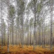 autumn woodland scene - stock photo