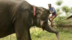 Man sits on top of an elephant Stock Footage