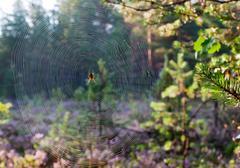 closeup of a spider web - stock photo